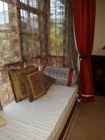 非洲鬱金香飯店照片