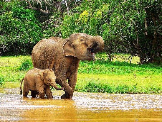 Tangalle, Sri Lanka: Elephant Bathing