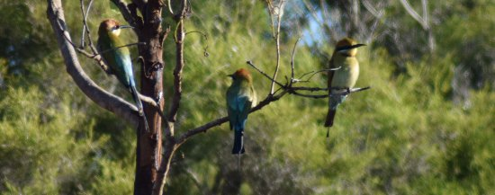 Jabiru Safari Lodge Foto