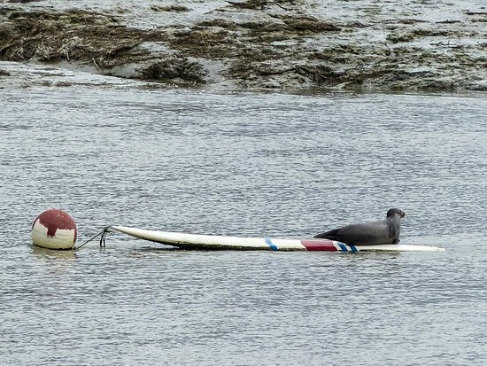 Les Canoes du Guildo: On y croise parfois des phoques.
