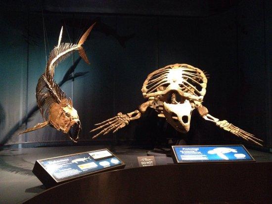 Tellus Science Museum : photo6.jpg