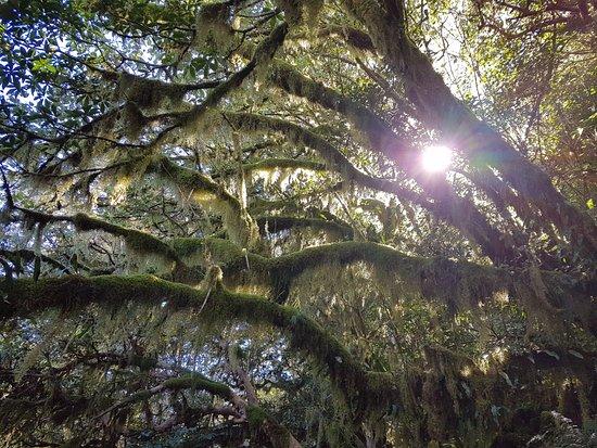 Milford, Новая Зеландия: Vegetation
