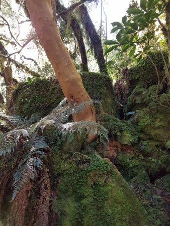 Milford, Новая Зеландия: Moos am Wegesrand