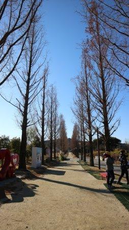 Suncheon, Νότια Κορέα: barisan pohon