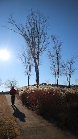 Suncheon, Νότια Κορέα: reeds