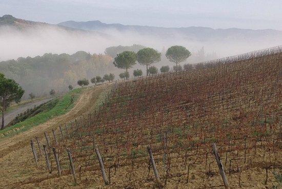 Montescudaio, Italia: A winter morning.