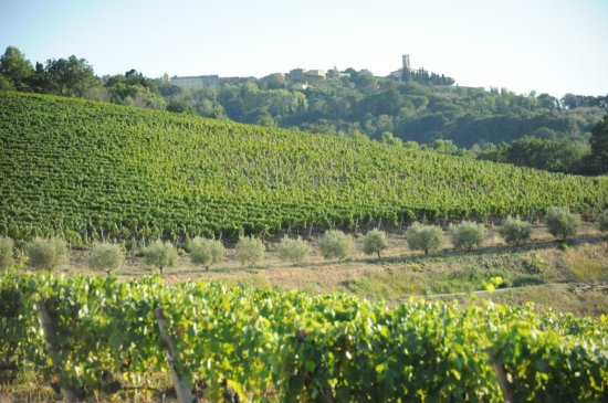 Can you find the bell tower of Montescudaio?