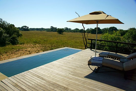Phinda Private Game Reserve Resmi