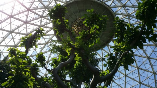 Mitchell Park Horticultural Conservatory (The Domes): Tropical dome April 2017