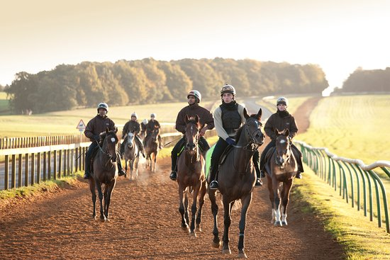 Newmarket, UK: On the Gallops (Contact us to find out how to visit the famous Warren Hill Gallops)