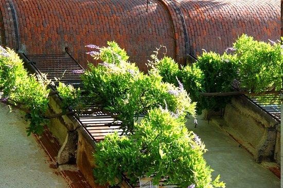 mur fleuri photo de orto botanico di brera milan. Black Bedroom Furniture Sets. Home Design Ideas
