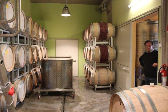 Montescudaio, Italia: In the cellar.