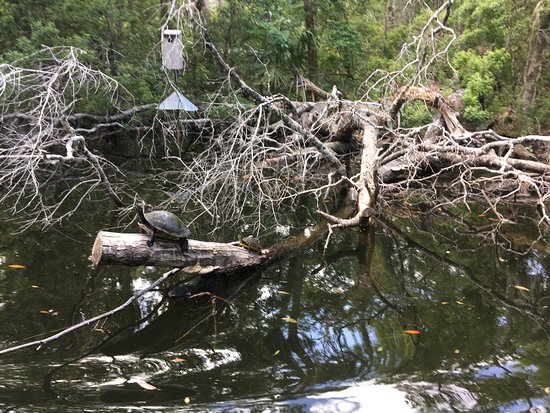 Homosassa Springs, FL: free river boat tour