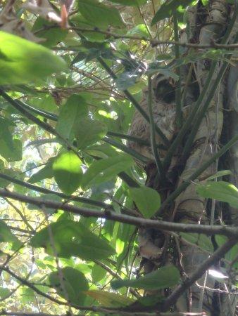 Manzanillo, Kosta Rika: paresseux