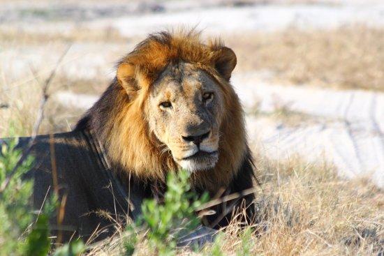 Maun, Botswana: photo1.jpg