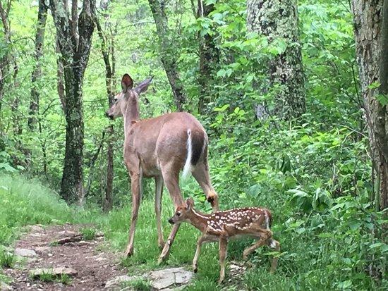 Appalachian Trail: photo1.jpg