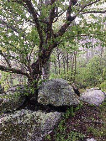 Appalachian Trail: photo4.jpg