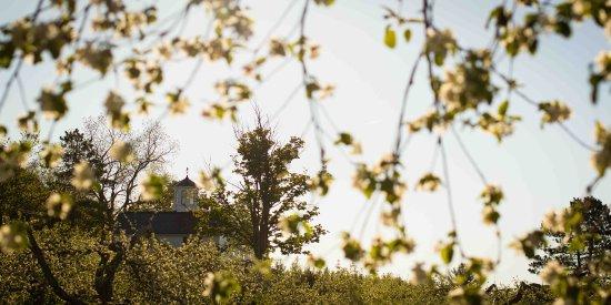 Frelighsburg, Canadá: La floraison