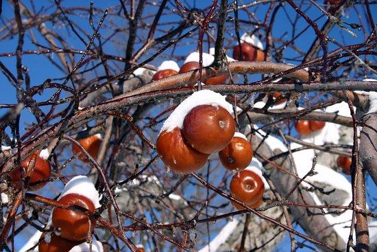 Frelighsburg, Canadá: Pommes gelées