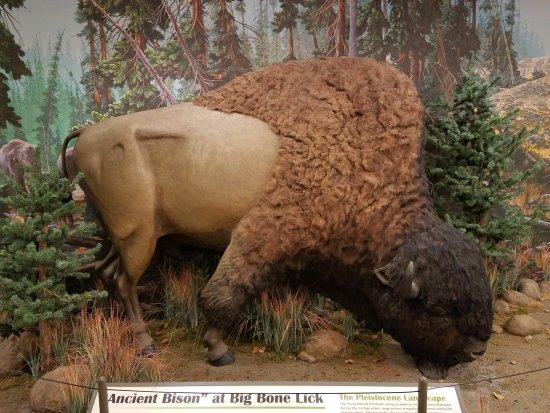 Union, KY: Big Bone Lick State Historic Site