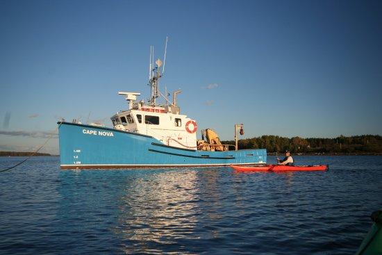 Mahone Bay, Canada: Visit working shellfish farms by kayak.