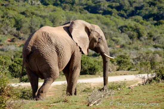 Nationaal wildpark Addo Elephant