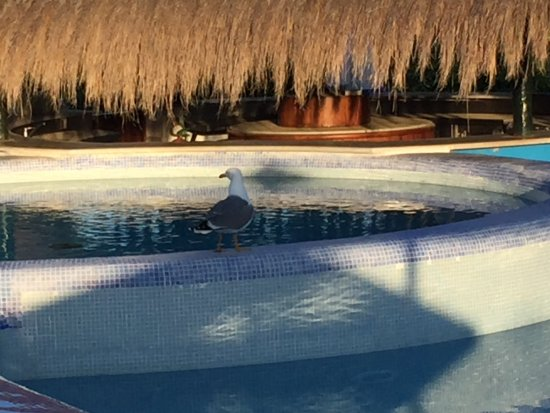 Blau Colonia Sant Jordi Resort & Spa: photo1.jpg