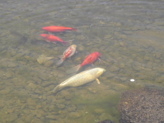 Los Álamos, Nuevo Mexico: Ashley Pond Park....local inhabitants.....