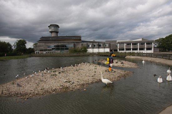 Slimbridge, UK: One of the swan ponds