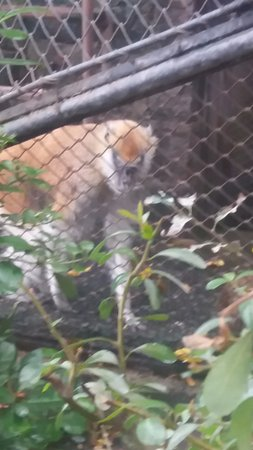 Santiago, Chili : Animais de lá