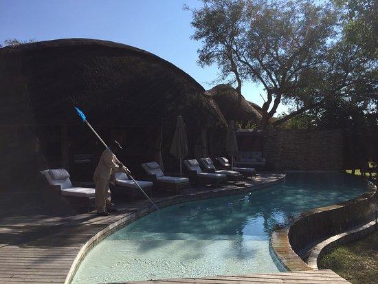 Timbavati Private Nature Reserve, Sydafrika: photo5.jpg