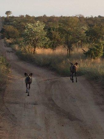 Timbavati Private Nature Reserve, Zuid-Afrika: photo8.jpg