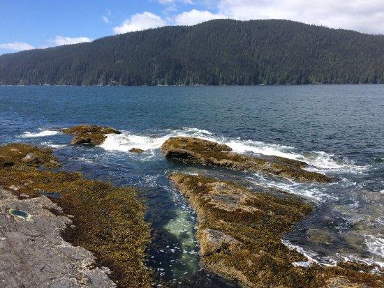 Port Renfrew, Canadá: photo5.jpg