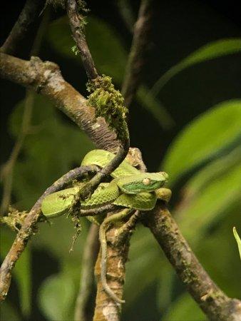Monteverde Cloud Forest Reserve, คอสตาริกา: photo2.jpg