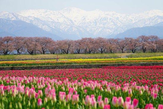 Asahi-machi, Japan: photo0.jpg