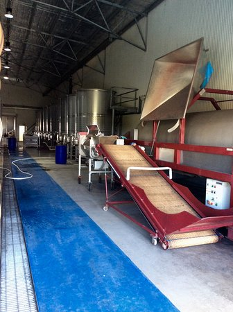 Pokolbin, Australia: This is where the grape crushing begins