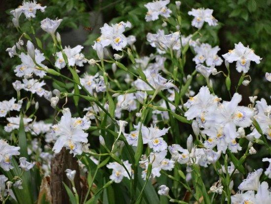 Izumi, Japan: 石段の途中の花。