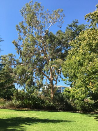 Albury Botanic Garden: Garden Border