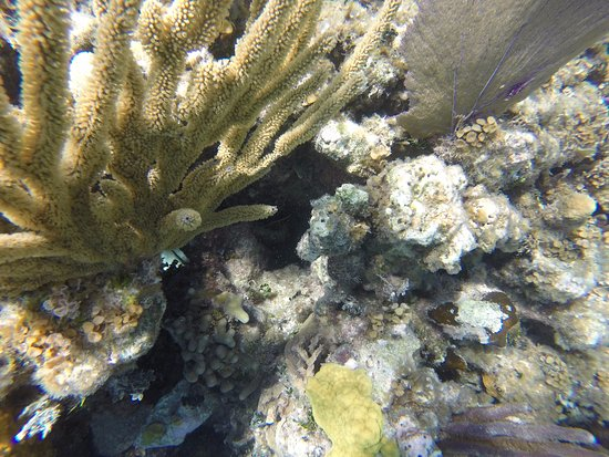 Ambergris Caye, Belize: LIVE coral!