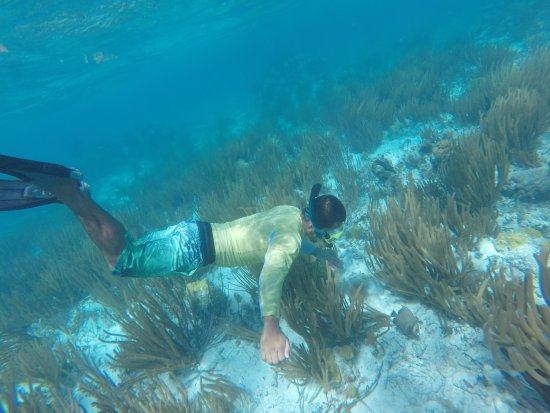 Ambergris Caye, Belize: Good dive guides point out the fish!