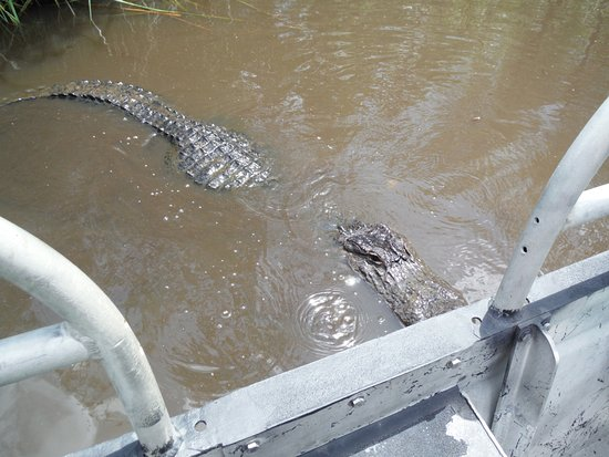 Moss Point, Mississippi: This gator came right up to the boat
