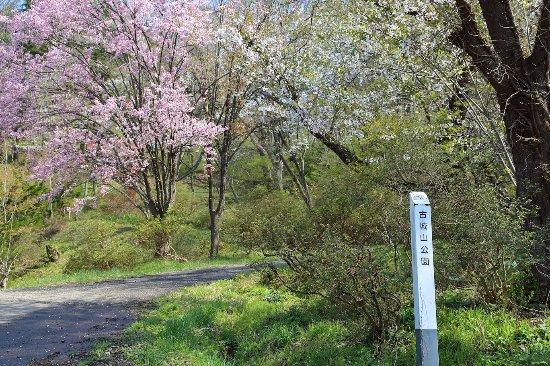 Furushiroyama Castle Ruins (Furushiroyama Park): 国道から入ったところ