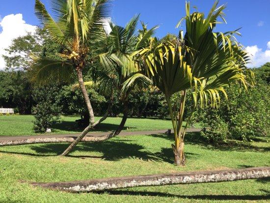 SSR Botanic Garden: photo0.jpg