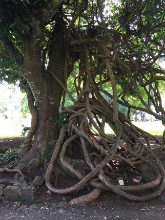 SSR Botanic Garden: photo1.jpg