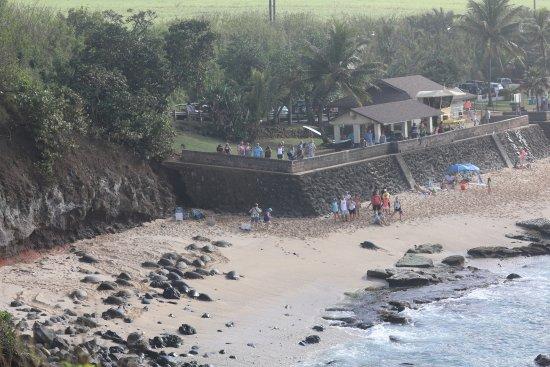 Paia, Hawái: Вид на пляж с обзорной площадки