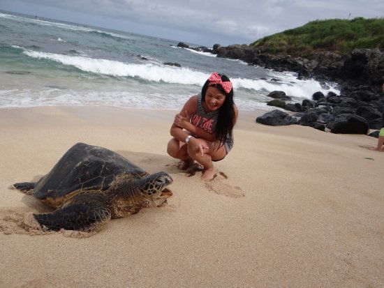 Paia, Hawái: черепаха разговаривает с Элей