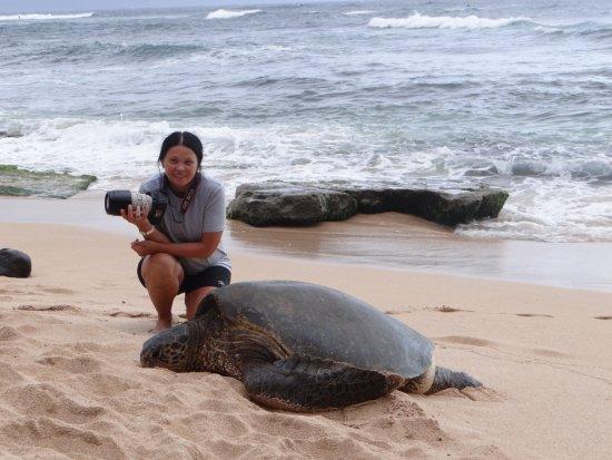 Paia, Hawái: вот такие огромные черепахи
