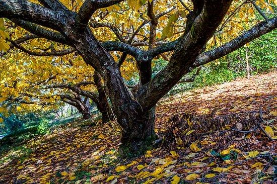 Olinda, أستراليا: Trees 1
