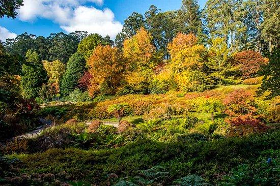 Olinda, أستراليا: Colours 1