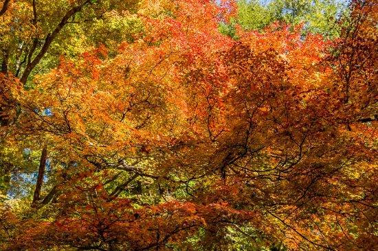Olinda, Avustralya: Red trees 2